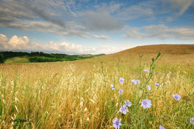 The Land of Sun and Flowers. How can anyone not fall in love with Tuscany?!