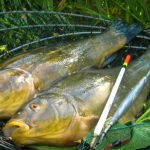Здесь рыба есть: линь в начале лета – способы ловли
