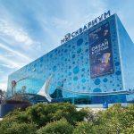 Ластоногий гид: морской лев Рокки приглашает на онлайн-прогулку по «Москвариуму»