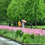 Москвичей предупреждают о сильном ветре и граде