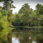 Фонд природы проведет толоки на болотах