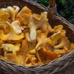 Началось! Латвийцы делятся щедрыми грибными находками из местных лесов (+ФОТО)
