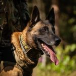 ФОТО: первую служебную собаку K-komando проводили на пенсию