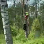 Соцсети бьют тревогу: медведи гоняют грибников уже под Ригой (+ВИДЕО)