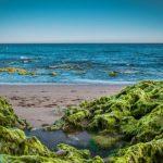 Семейный врач напоминает, чем опасны сине-зеленые водоросли