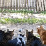 Видео: голубь устроил «представление» для кошек из приюта