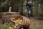 Агентство по охране природы о грибниках: это уже выходит за рамки закона!