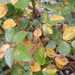 Погода на пятницу: подходящая осень уже начинает брать свое