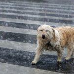 В субботу по всей Латвии ожидается дождь, местами - сильный