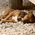 Полиция расследует жестокое убийство собаки близ Пярну