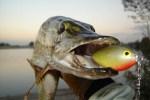 Здесь рыба есть: осенние особенности рыбалки
