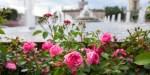 День города празднуют в российской столице