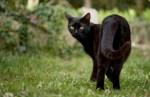 ВИДЕО: черные коты и кошки ждут новых хозяев
