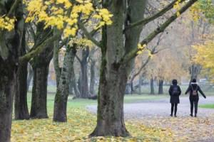 Синоптики сделали прогноз на первую неделю ноября