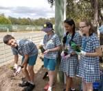 Общины Австралии высадили деревья в память о воинах-союзниках Первой мировой войны