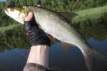 Здесь рыба есть: как ловить под мостом
