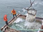 Камчатские рыболовы не заметили последствий для промысла после сообщений о загрязнении