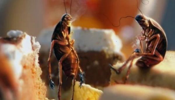 Как избавиться от тараканов дома: народные рецепты и препараты-профи