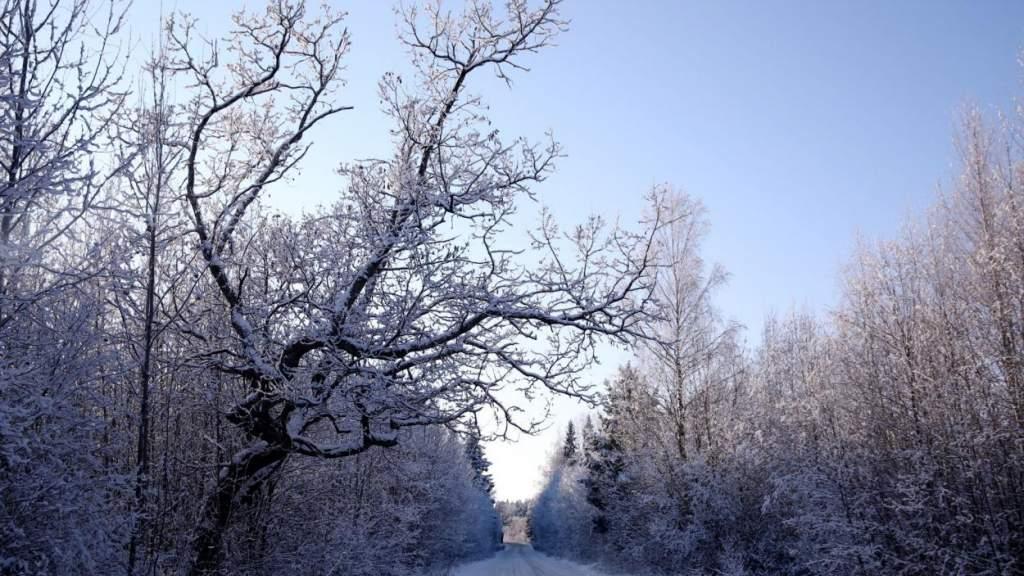 Достаем шубу: наступление метеорологической зимы в Латвии уже совсем близко
