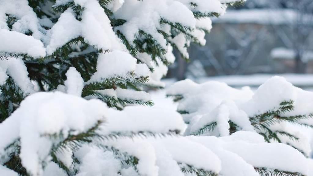 Со вторника в гослесах можно будет срубить новогоднюю елку