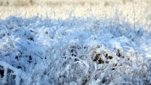 Готовимся: объявлен прогноз погоды на воскресенье в Латвии