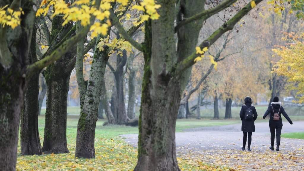 Прошедший ноябрь стал самым теплым в истории Латвии