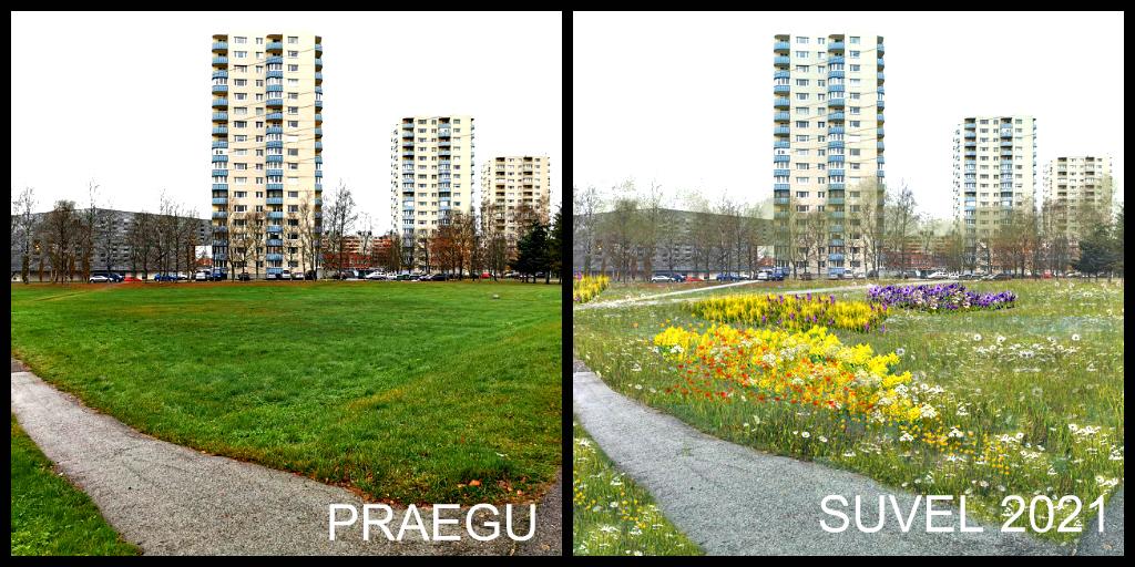 Хорошие новости: в Ыйсмяэ появится первый в Таллине цветочный луг