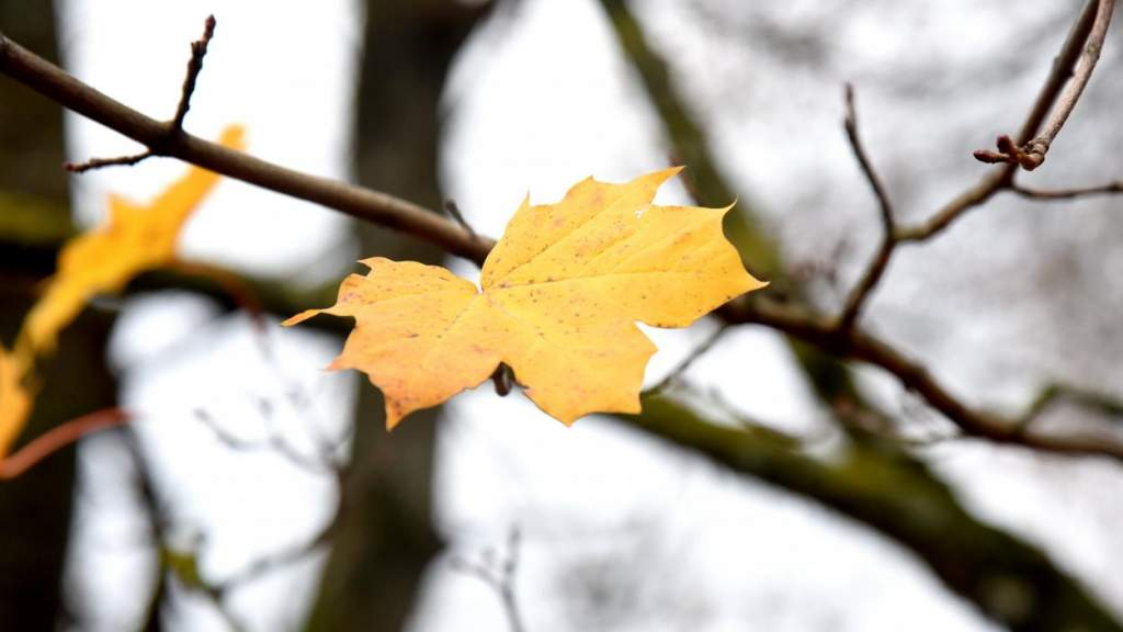 В субботу температура воздуха в Латвии поднимется до +7 градусов