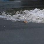 В Мустамяэ недовольны уборкой улиц: ответственную за это фирму оштрафуют на 9000 евро