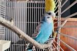 В Тарту объявили конкурс на имя для попугая