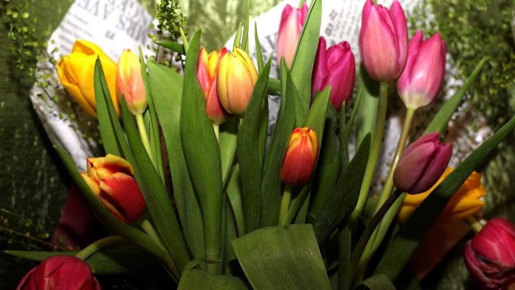 Соотечественники в Ирландии предлагают поздравить женщин с 8 Марта