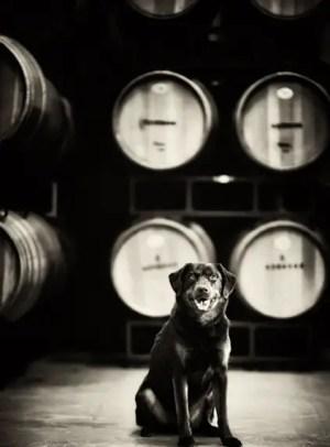 breaux vineyard