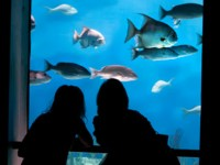 National Aquarium Half Price Friday Night Tickets