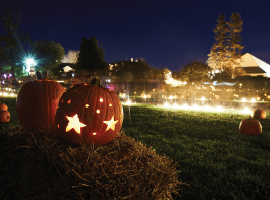 How does your garden glow this Halloween?