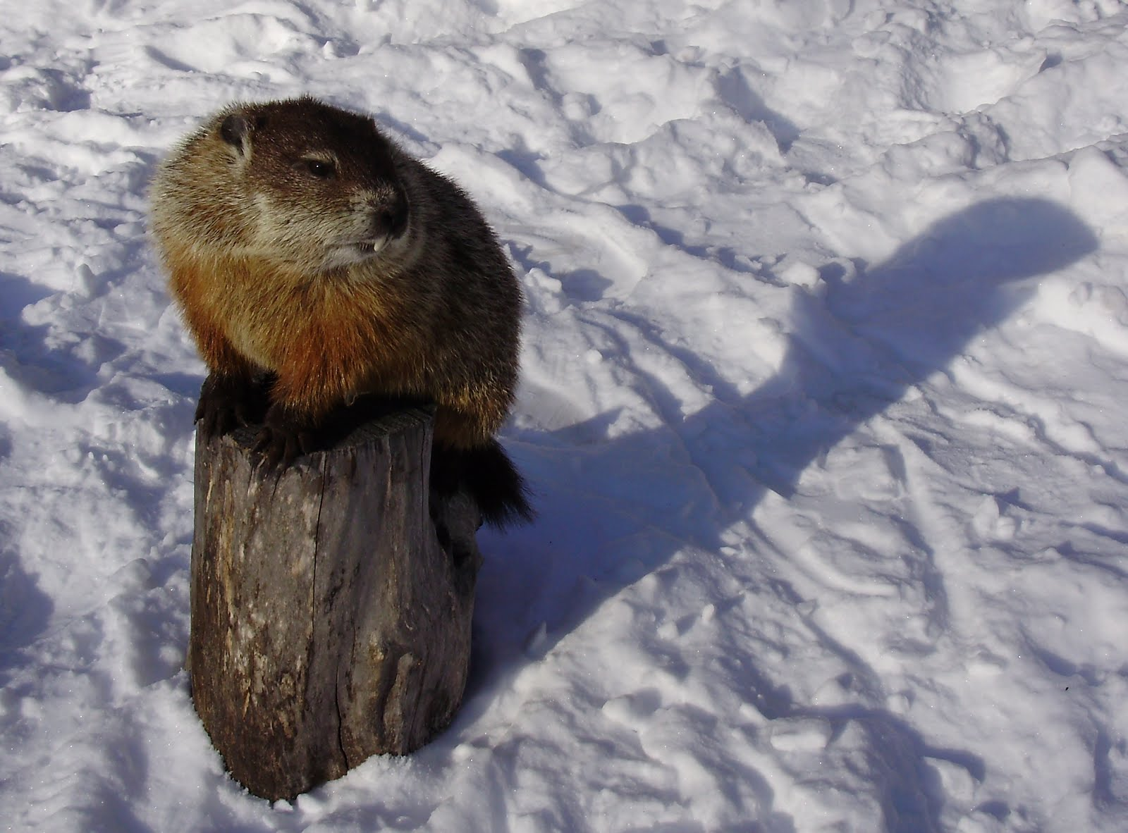 The Story Of The Groundhog And His Shadow