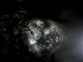 Martrys of Mehi Mutilated bodies 30 June 2015 9