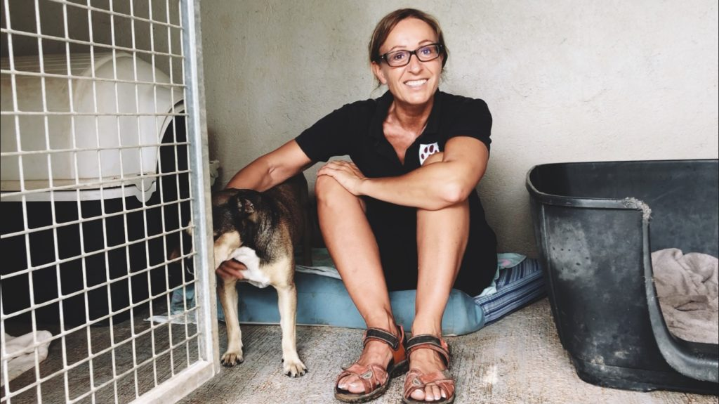 s o s animal rescue mallorca balu