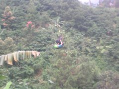 In Action - Flying Fox
