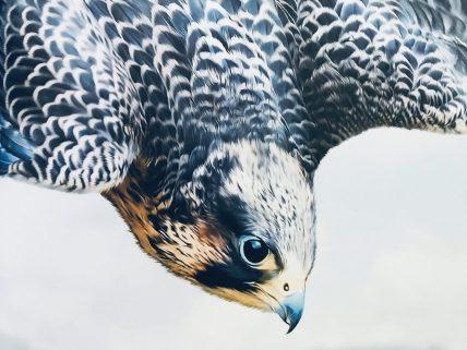 Le livre extraordinaires des oiseaux spectaculaires