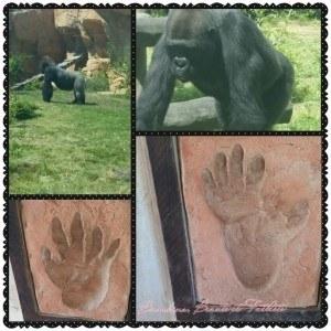 Singe Zoo Amnéville