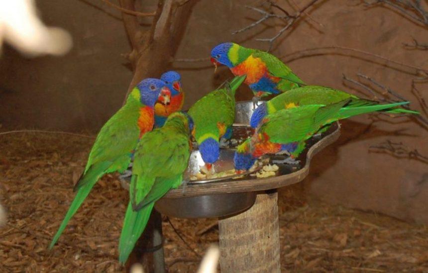Duisburg040 1024x654 - Besuch im Duisburger Zoo