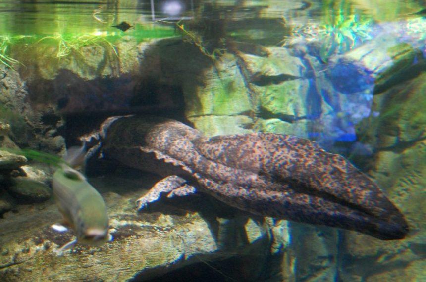 Duisburg086 1024x679 - Besuch im Duisburger Zoo