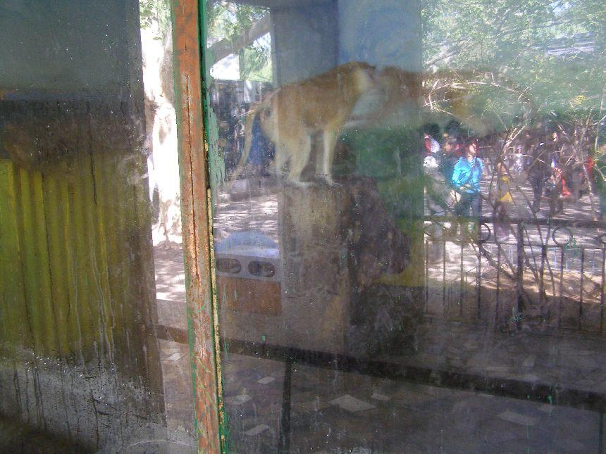 Peking Zoo