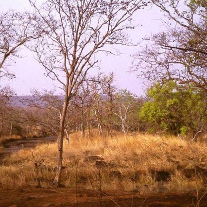 Panna Nationalpark