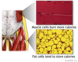 ... fat versus one pound of muscle Focus on all of the health benefits of  having more muscle mass, not just on the calorie burning abilities of muscle