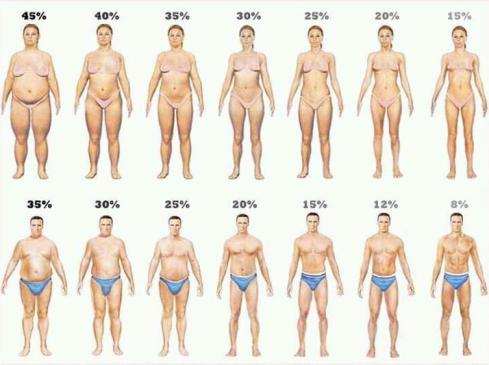 Visual representation of what various body fat percentages look like