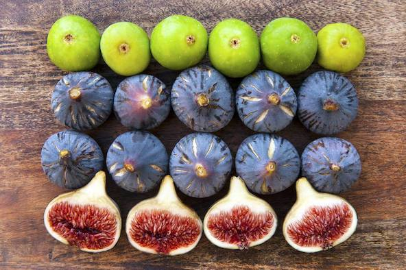 Figs And Sperm