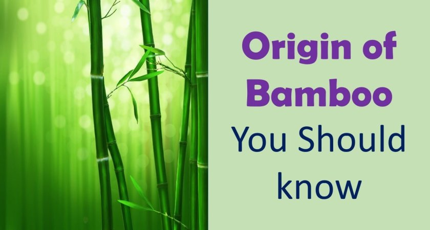 Origin of Bamboo- You Should know