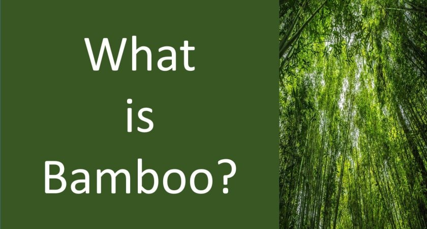 What is Bamboo?