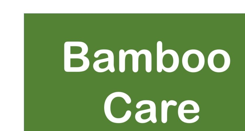 Basic Bamboo Care -You Should Know About It.